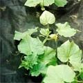 Укрывной материал Спанбонд для защиты растений и посевов СУФ 60 (черный)