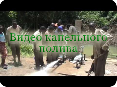 Видео капельного полива